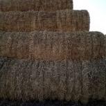 Продаем сено из люцерны в рулонах по 320 кг, Волгоград