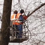 Спил деревьев, Волгоград